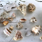 A collection of sea shells in Bintan Island