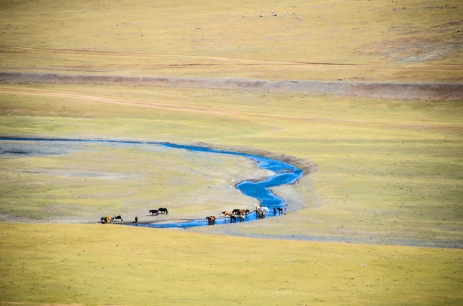 Horses watering at a affluent of Kherlen river