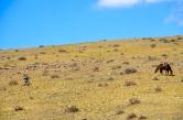 A shepherd resting