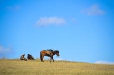 Shepherds resting