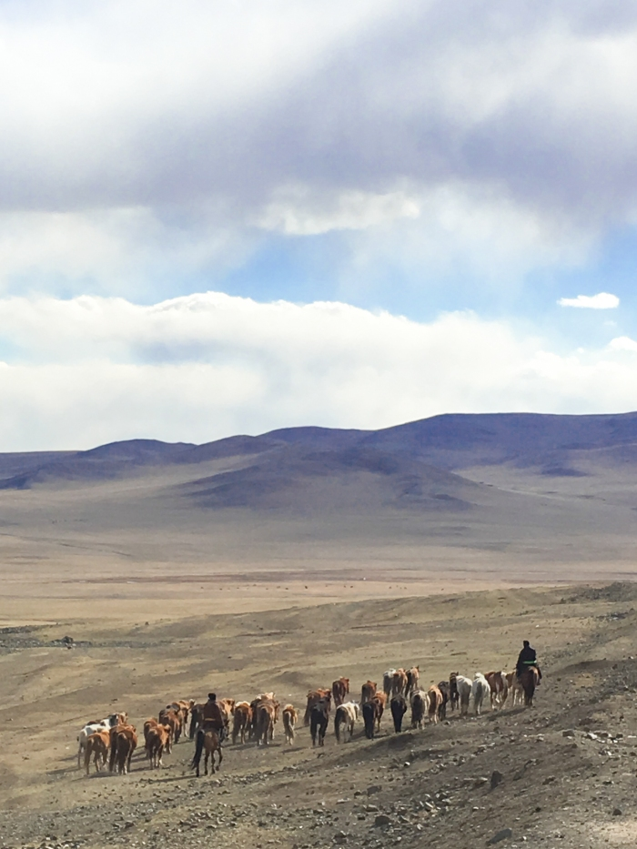 Horsemen and a herd of Mongolian horses