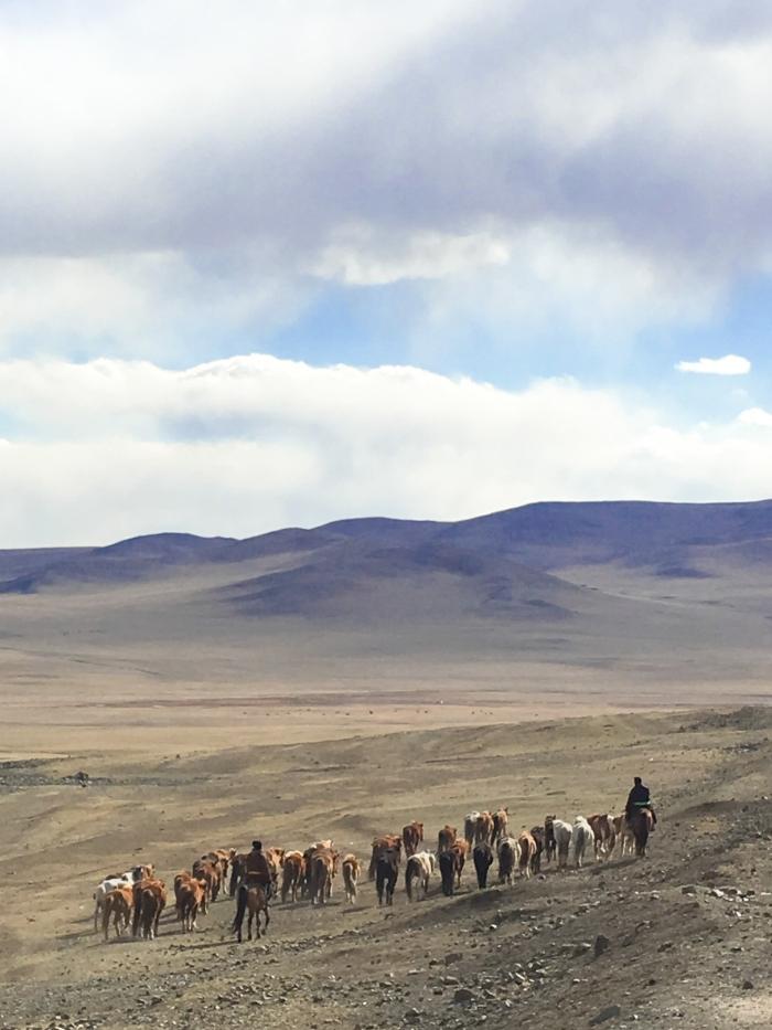 Horsemen and a herd of Mongolian horses