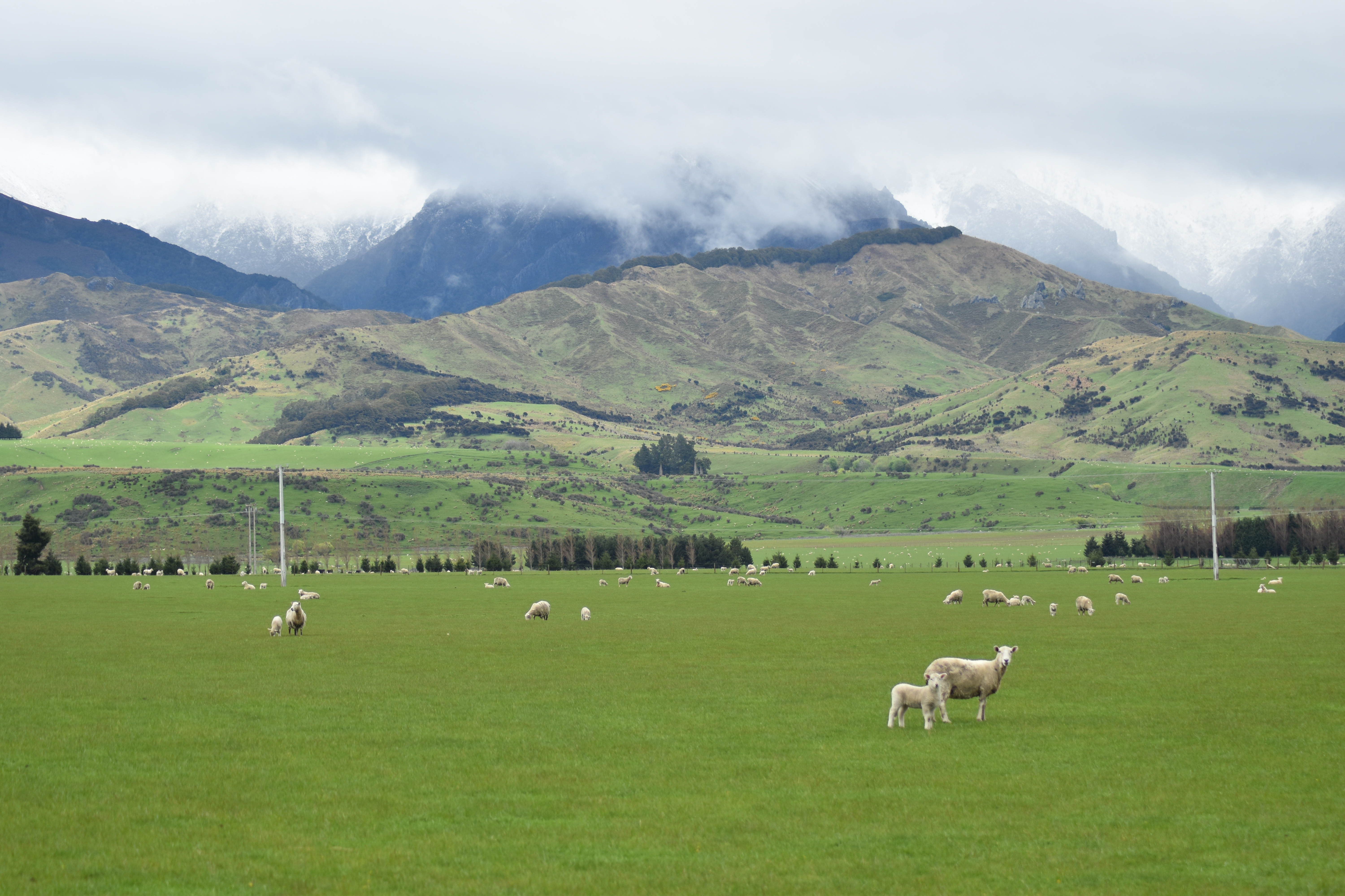 New Zealand travel photos